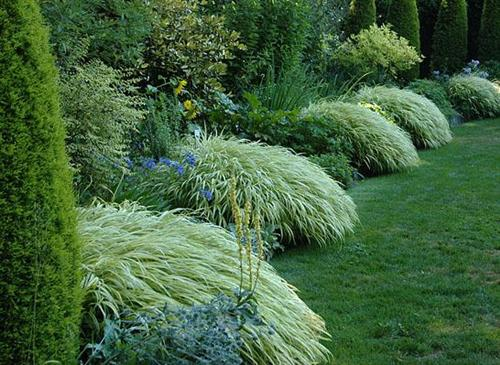 Show me your backyards please for Ornamental grass front yard